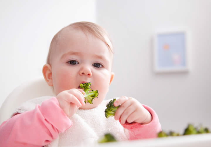 bbmundo Bebé Vegetariano WP