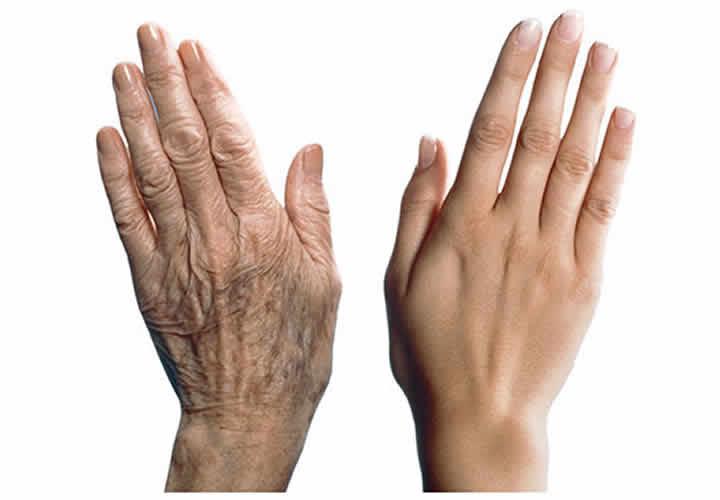 descubren-proteina-que-revierte-el-envejecimiento