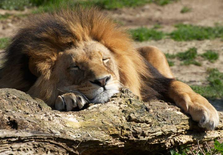 dormir-como-profesional
