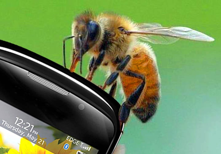 abeja-celular