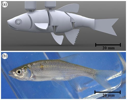 robot-medidas-pez