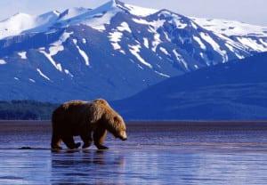 alaska-animales
