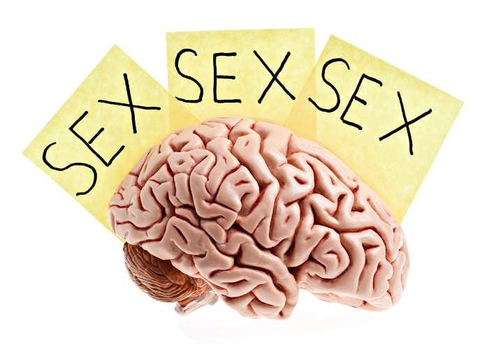 sexualidad desde el cerebro