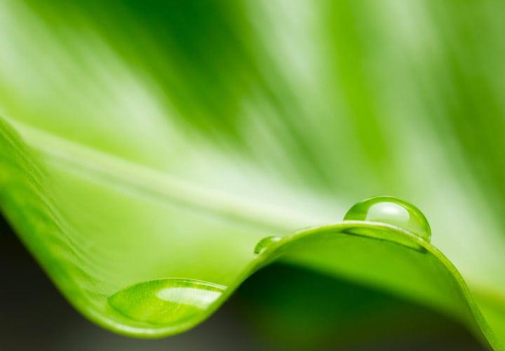 Por-que-ser-verde