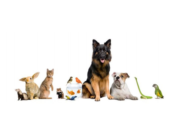 7-cosas-que-tu-mascota-dice-sobre-tu-personalidad