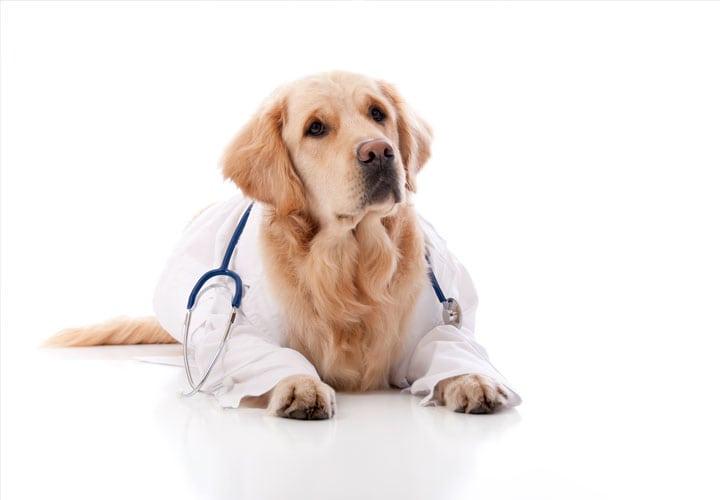 Cada-cuanto-ir-al-veterinario