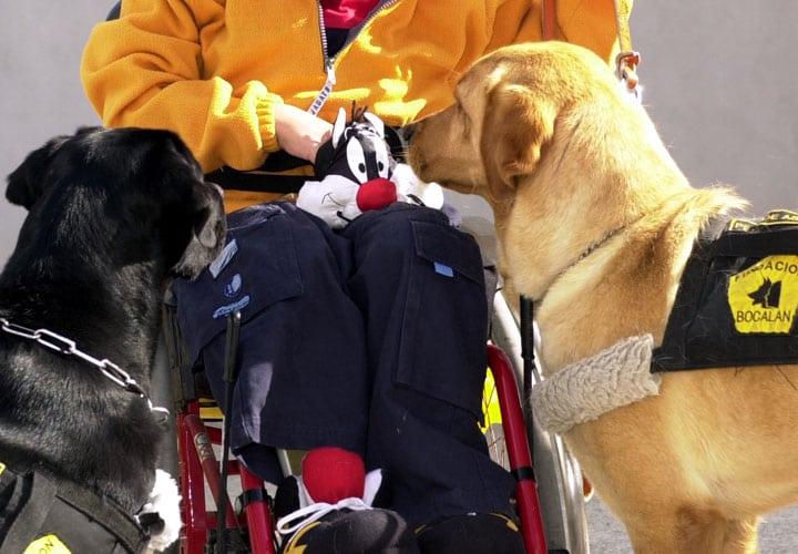 los_perros_tambien_trabajan