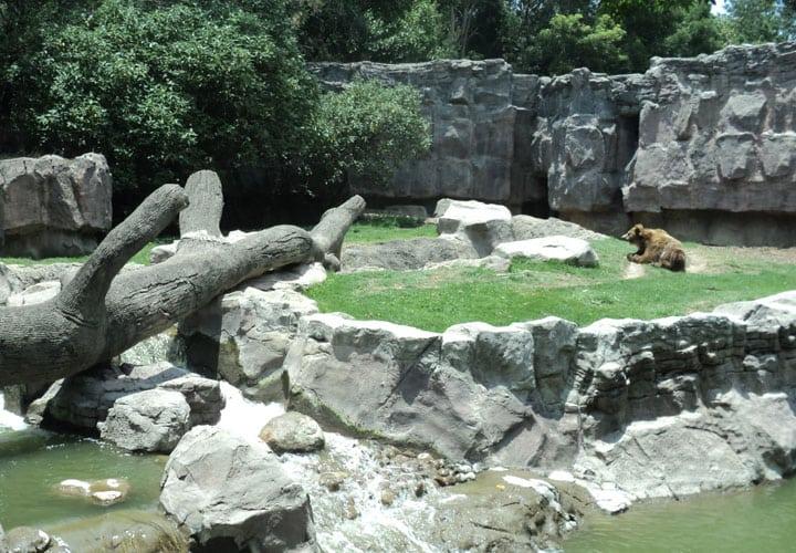 zoologico-de-chapultepec1