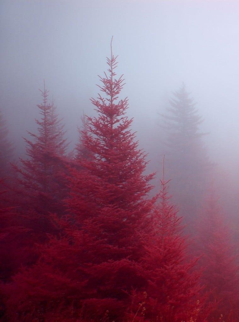 Bosque-rojo