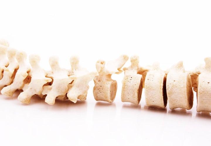 Spinal cord bones