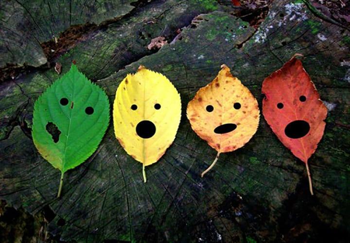 fall1 (1)