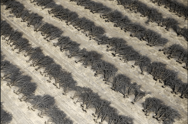 campo-de-almendros