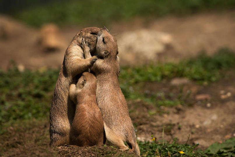 amor-familia