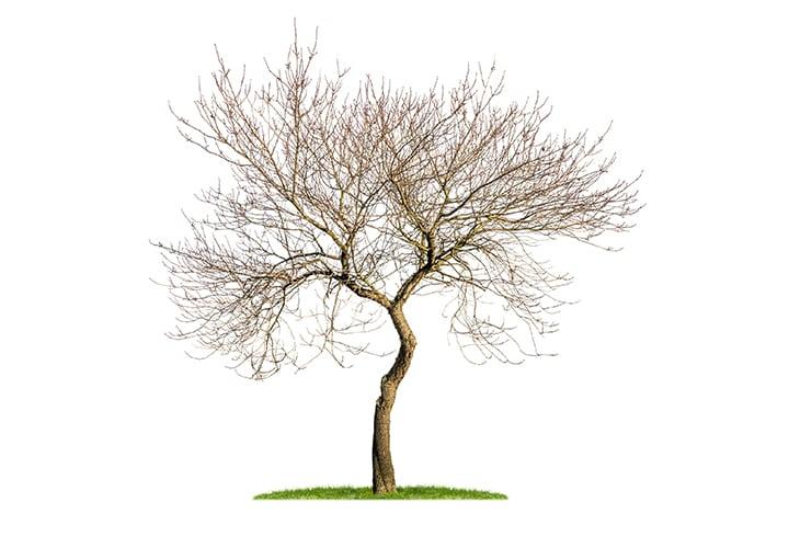 arbol-seco