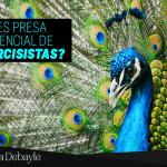 ¿Eres presa potencial de narcisistas?