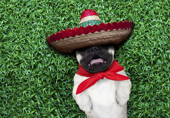 mexicanos-al-girto