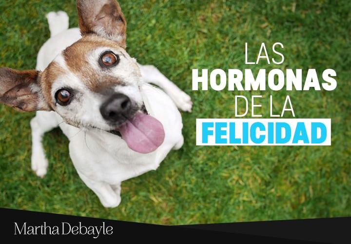 Las-hormonas-de-la-felicidad-com