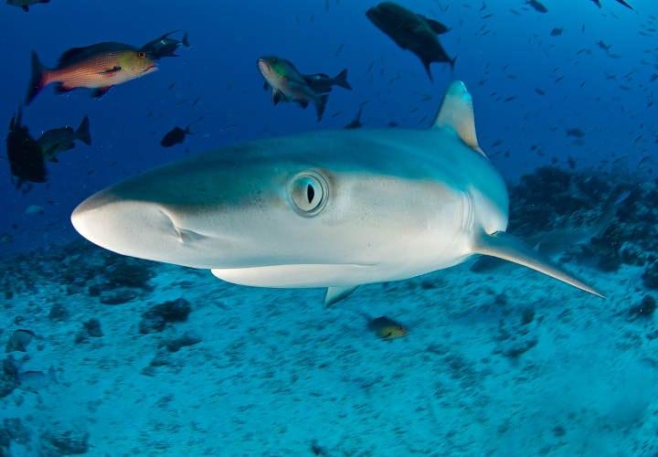 mentalidad de tuburon