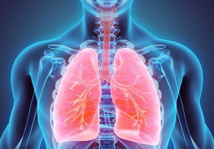 pulmon