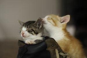 two kitties playing