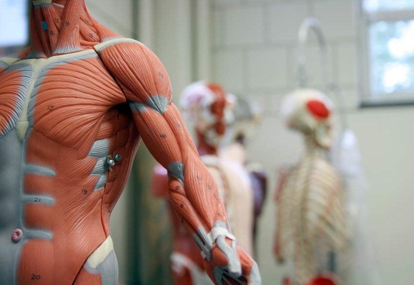 Qué son los ligamentos, tendones, esguinces y desgarres? | Martha ...