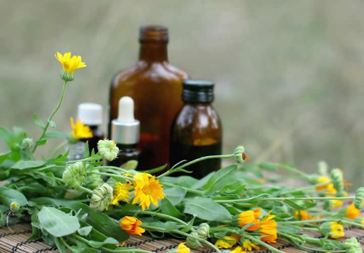 Día Internacional Herbolaria WP