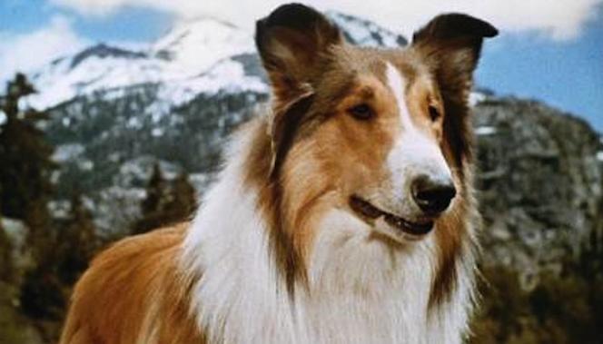lassie-cozi-thumb