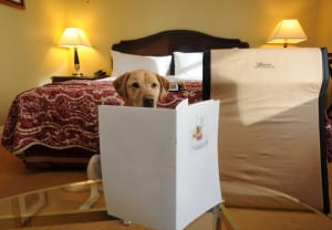 hoteles_pet_friendly