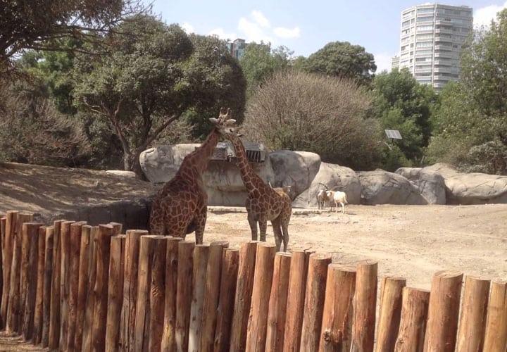 zoologico-de-chapultepec