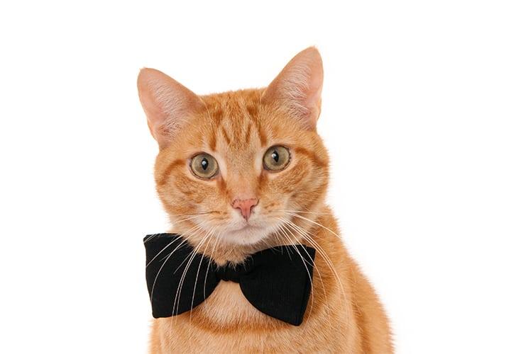 Razones Por Las Que Deberías Tener Un Gato Martha Debayle