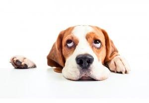 lo que tu perro odia