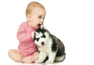 que-hacer-si-tu-mascota-no-acepta-al-bebe