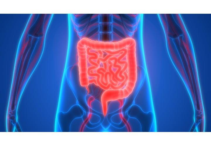 en que parte del estomago esta la apendice